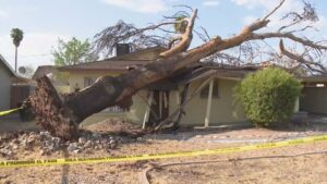 Tree Falls on House and The Best Restoration Company in Scottsdale is Called to help(1)